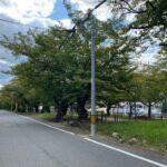 雑餉隈の桜並木通り(周辺)